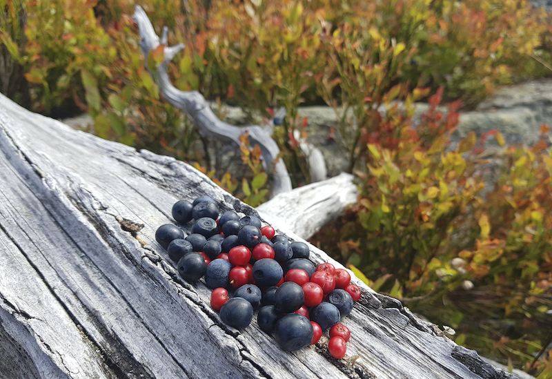 Wild Blueberries and Cranberries from Canada